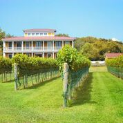 West Cape May Vineyard