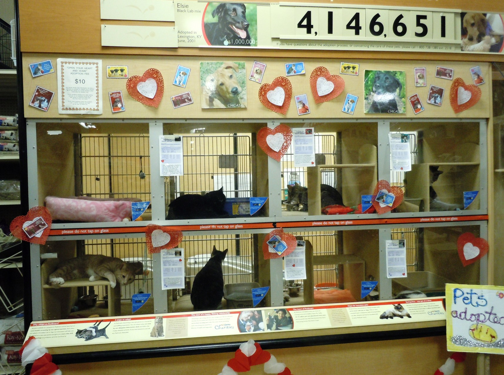 Cats in cages on display for adoption at PetSmart