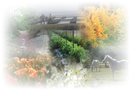 Collages of a trail, flower gardens, farming, and a couple of horses